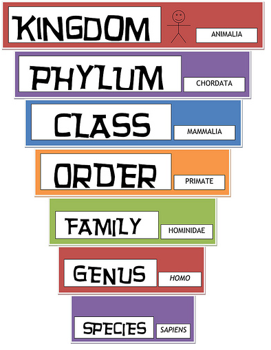 classification of organisms Scientists classify organisms and assign each one a universally accepted name scientists classify because it is an organized way to communicate about the same organism all over the world a classification system was developed because.